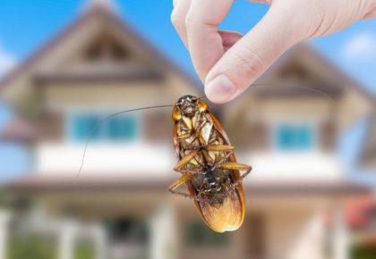 Medidas de control de plagas en comunidades de vecinos