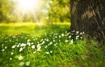 Plagas más comunes en primavera, ¿cómo prevenirlas?