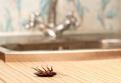 Mitos y mentiras sobre cómo acabar con las cucarachas