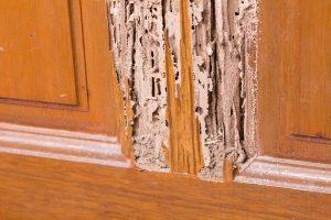 ¿Cómo saber si tengo termitas en casa?